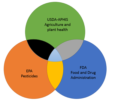 Biotechnology Regulatory framework