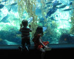 Sea Creatures at Birch Aquarium